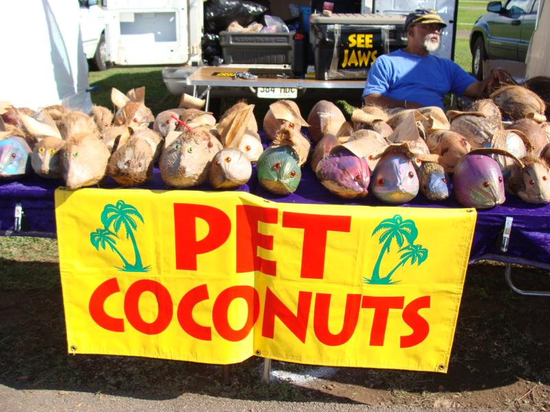 Need a pet coconut? Don't be ridiculous-- of course you do.